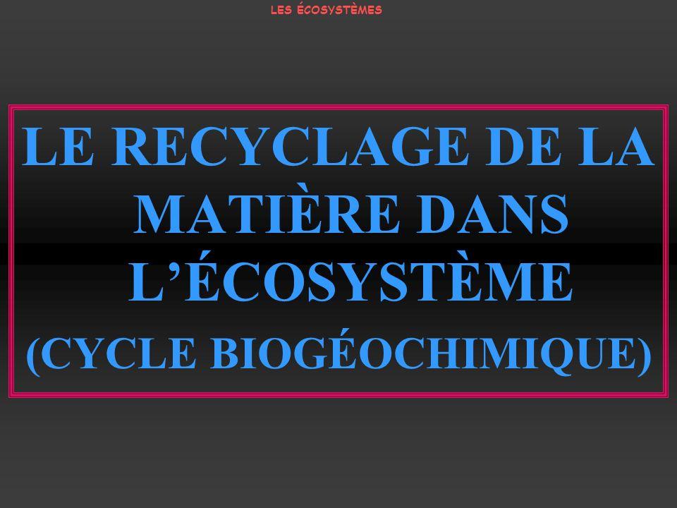 LE RECYCLAGE DE LA MATIÈRE DANS L'ÉCOSYSTÈME (CYCLE BIOGÉOCHIMIQUE)