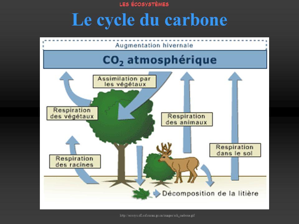 Le cycle du carbone LES ÉCOSYSTÈMES