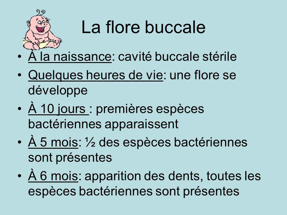 La flore buccale À la naissance: cavité buccale stérile