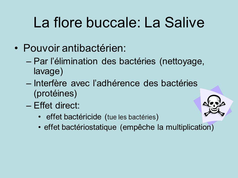 La flore buccale: La Salive
