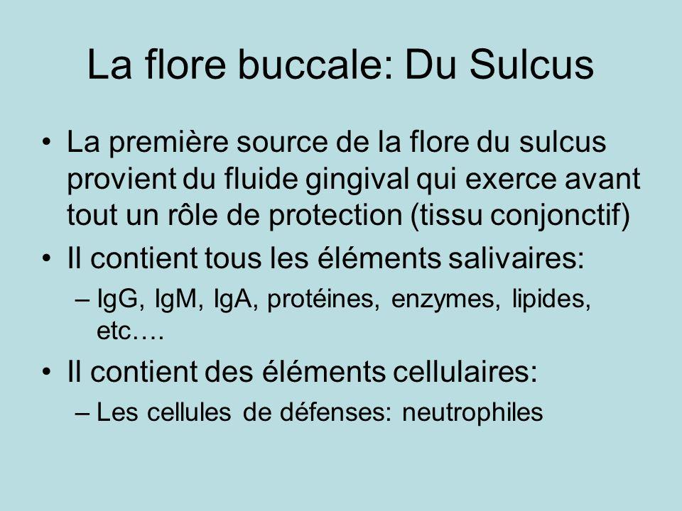 La flore buccale: Du Sulcus