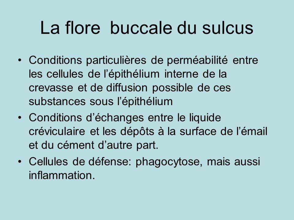 La flore buccale du sulcus