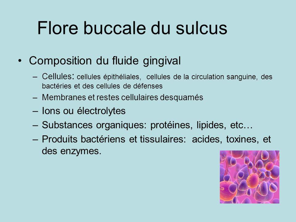 Flore buccale du sulcus