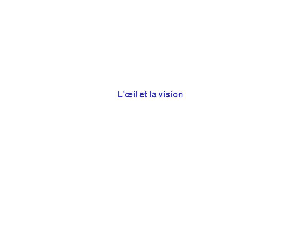 L œil et la vision