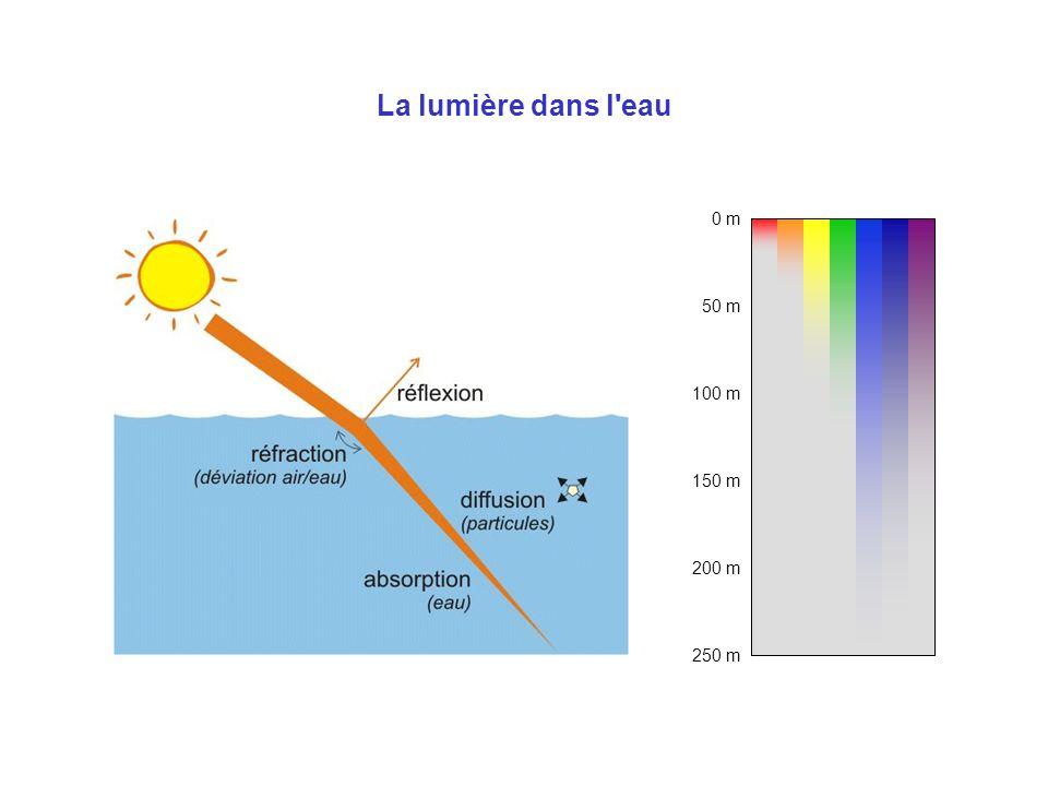 La lumière dans l eau 0 m 100 m 50 m 200 m 150 m 250 m