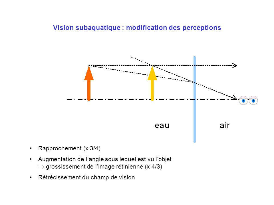 Vision subaquatique : modification des perceptions