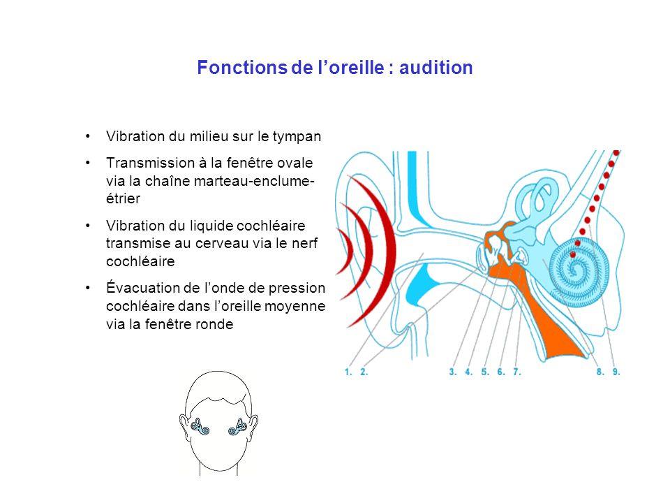 Fonctions de l'oreille : audition