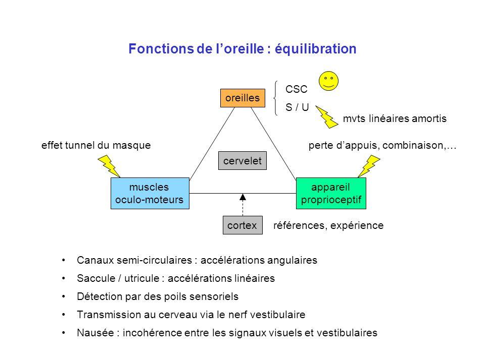 Fonctions de l'oreille : équilibration