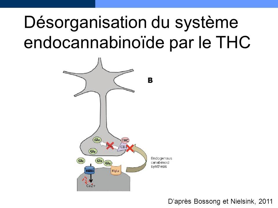 Désorganisation du système endocannabinoïde par le THC