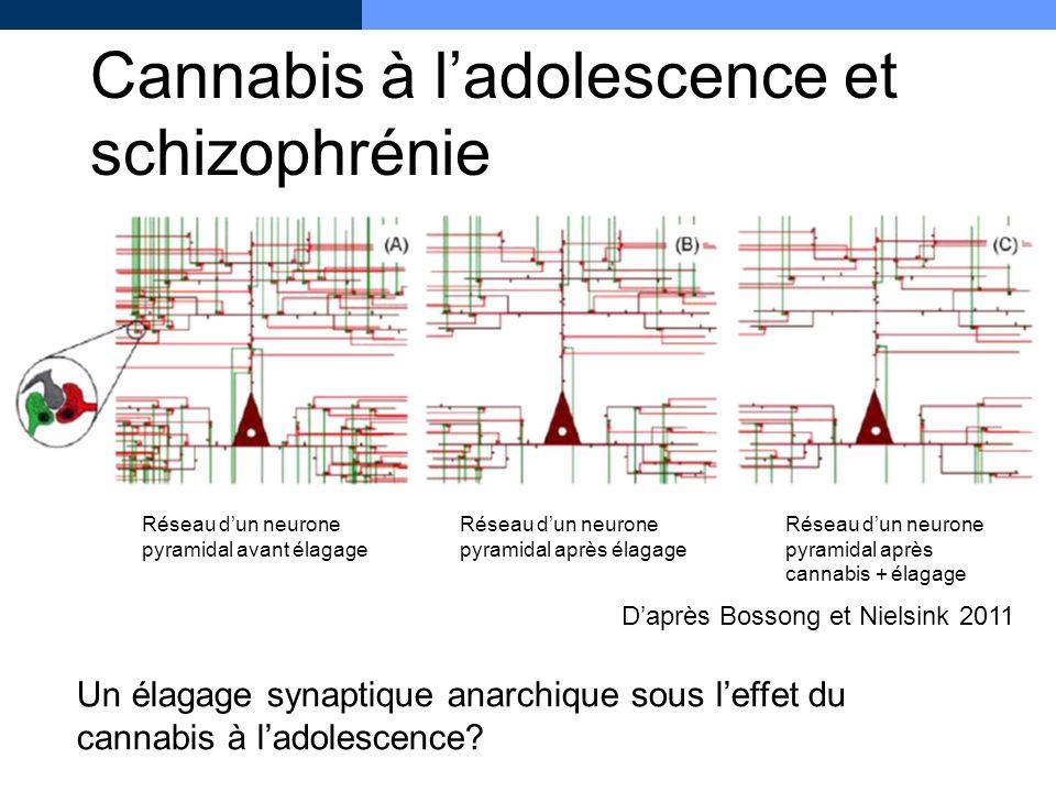 Cannabis à l'adolescence et schizophrénie