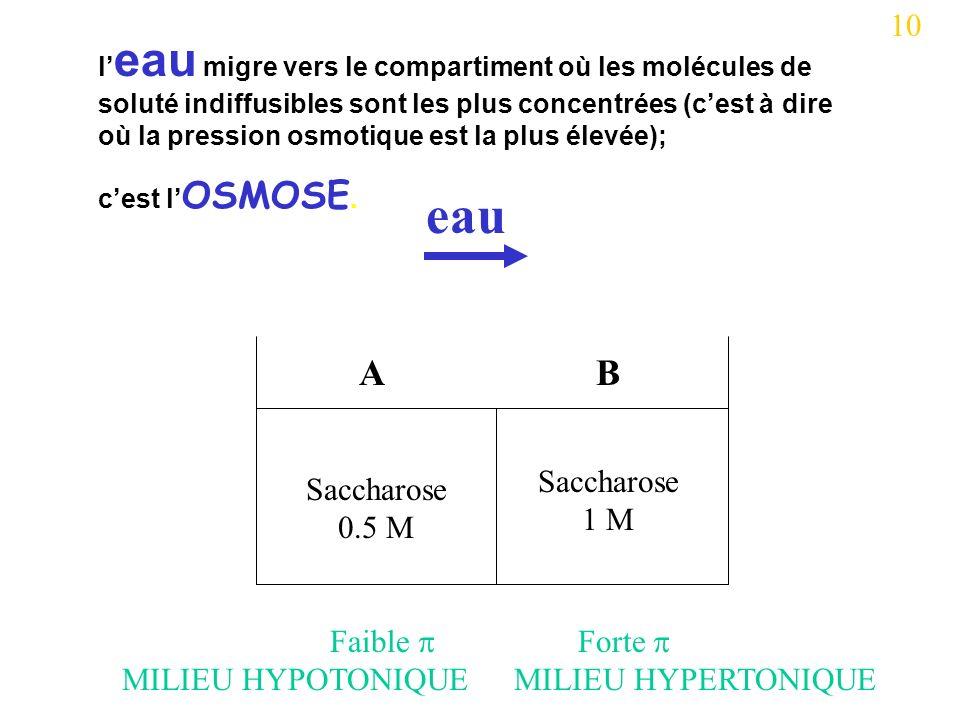eau A B 10 Saccharose 0.5 M Saccharose 1 M Faible  MILIEU HYPOTONIQUE