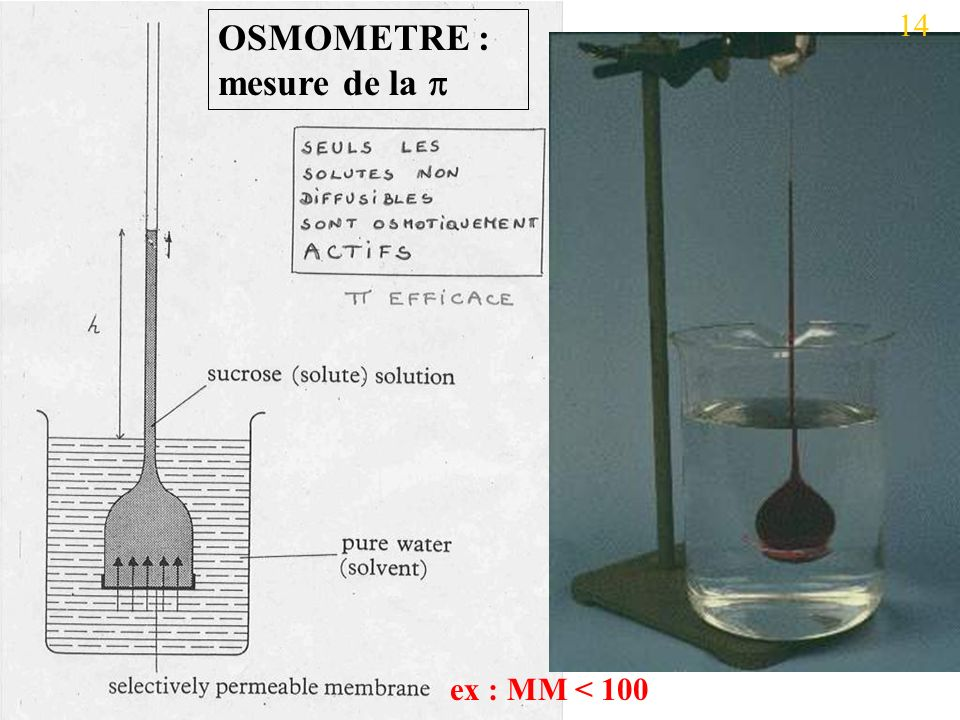 OSMOMETRE : mesure de la 