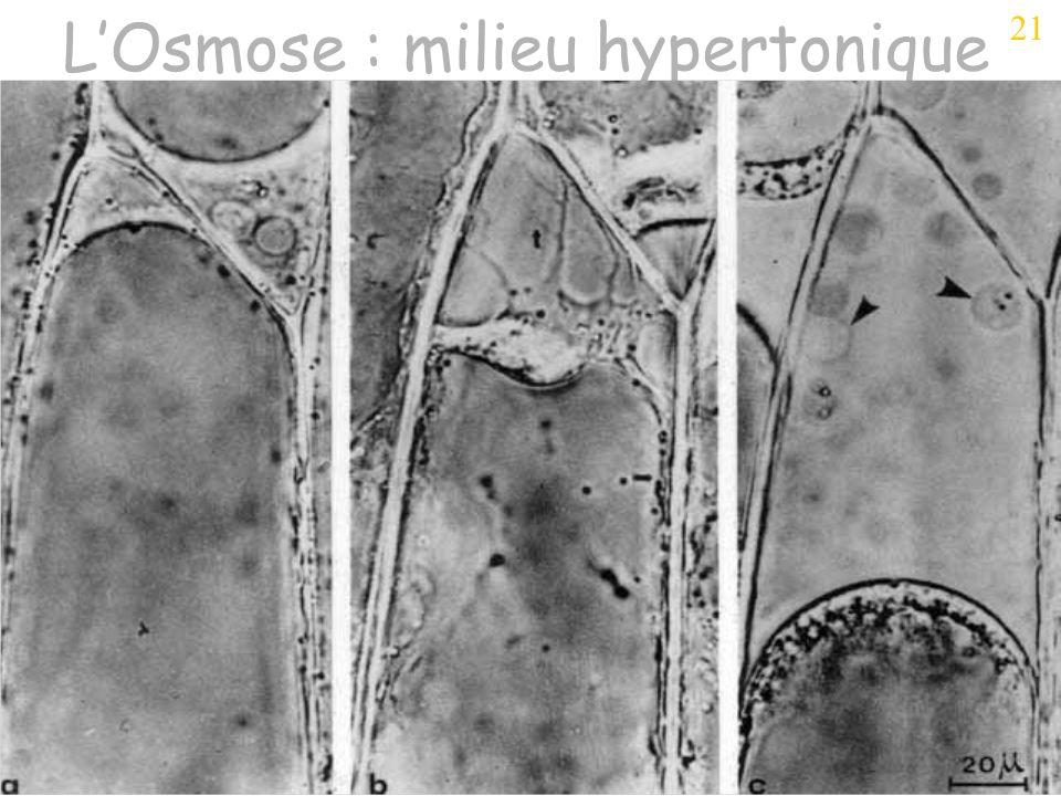 L'Osmose : milieu hypertonique