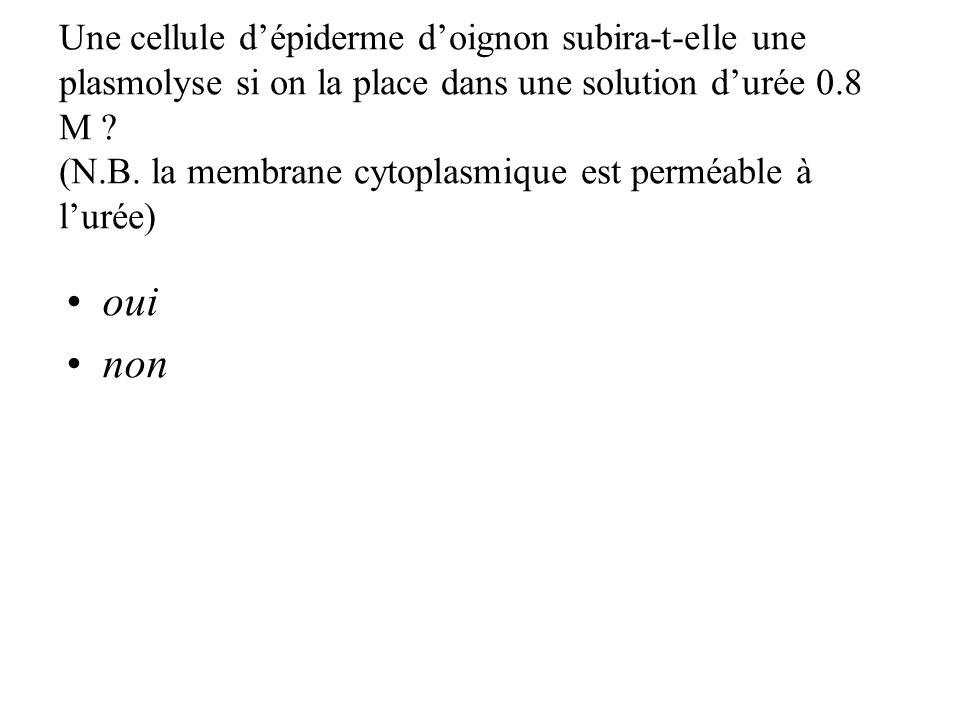 Une cellule d'épiderme d'oignon subira-t-elle une plasmolyse si on la place dans une solution d'urée 0.8 M (N.B. la membrane cytoplasmique est perméable à l'urée)