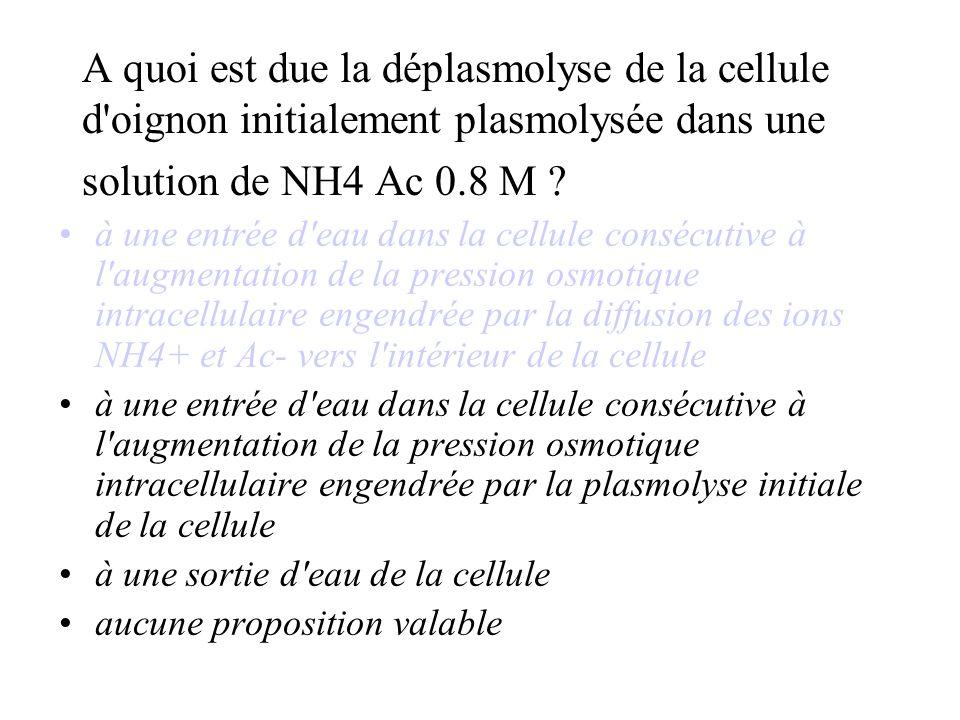 A quoi est due la déplasmolyse de la cellule d oignon initialement plasmolysée dans une solution de NH4 Ac 0.8 M