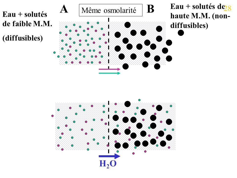 A B H2O Eau + solutés de haute M.M. (non-diffusibles) 28