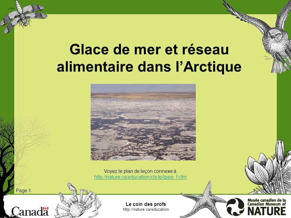 Glace de mer et réseau alimentaire dans l'Arctique
