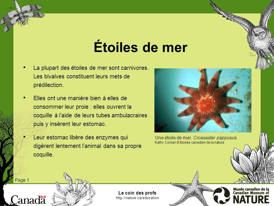 Étoiles de mer La plupart des étoiles de mer sont carnivores. Les bivalves constituent leurs mets de prédilection.
