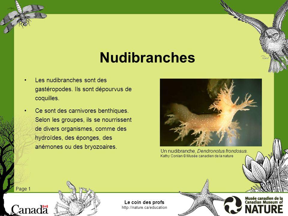 Nudibranches Les nudibranches sont des gastéropodes. Ils sont dépourvus de coquilles.