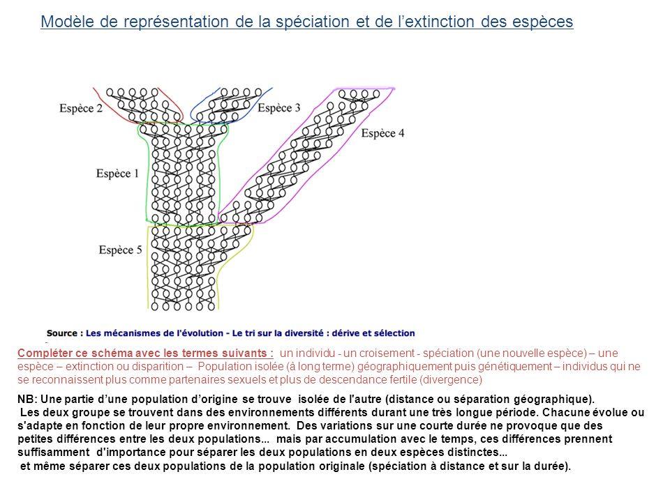 Modèle de représentation de la spéciation et de l'extinction des espèces