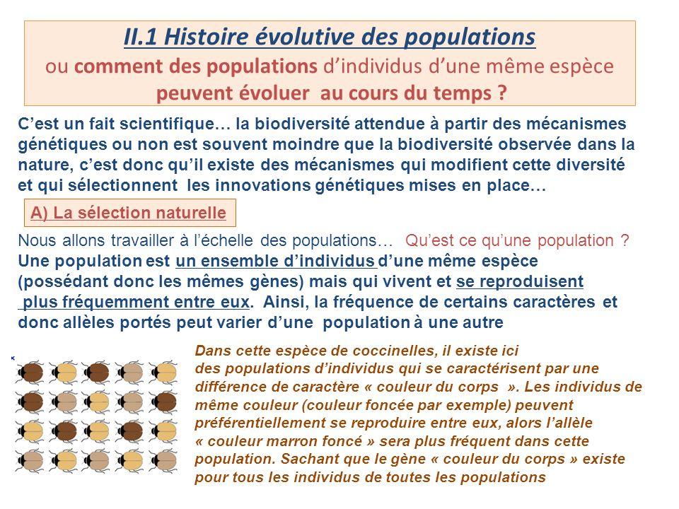 II.1 Histoire évolutive des populations ou comment des populations d'individus d'une même espèce peuvent évoluer au cours du temps