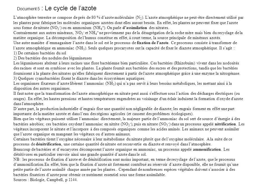 Document 5 : Le cycle de l'azote