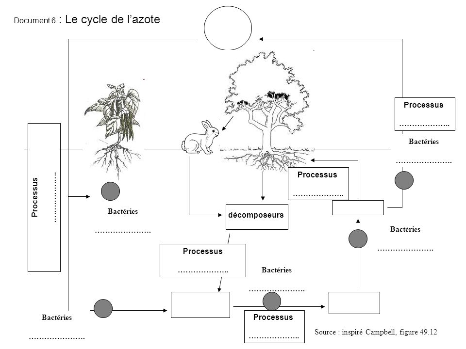 Document 6 : Le cycle de l'azote
