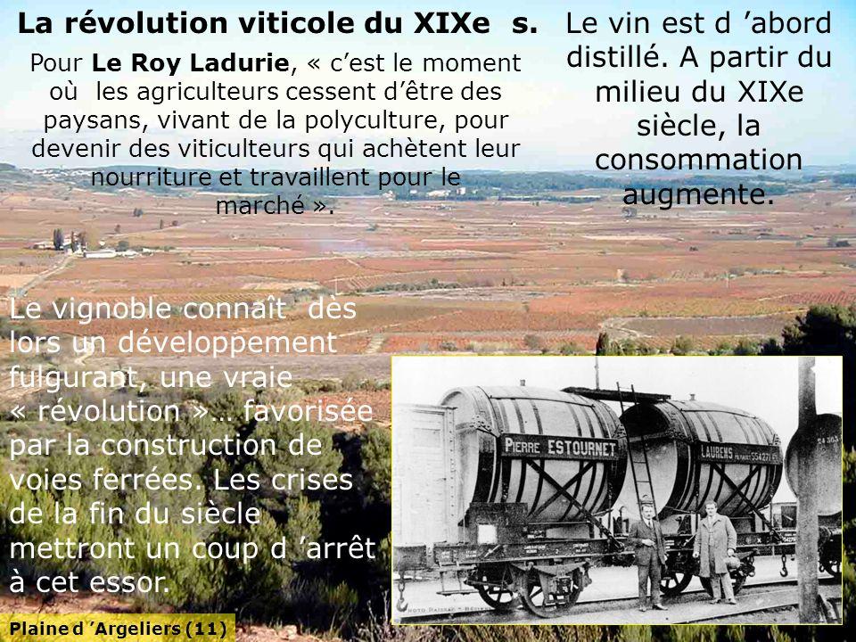 La révolution viticole du XIXe s.