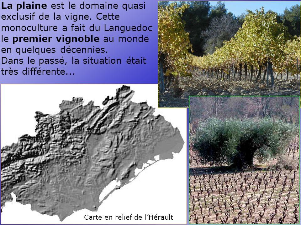 Carte en relief de l'Hérault