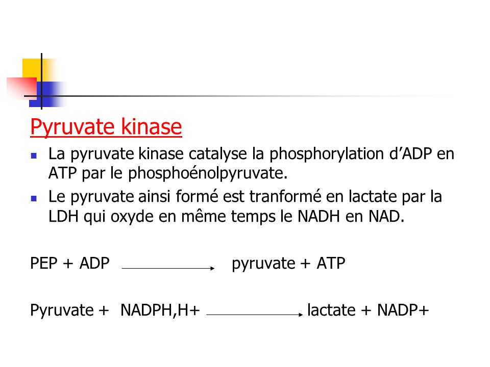 Pyruvate kinase La pyruvate kinase catalyse la phosphorylation d'ADP en ATP par le phosphoénolpyruvate.