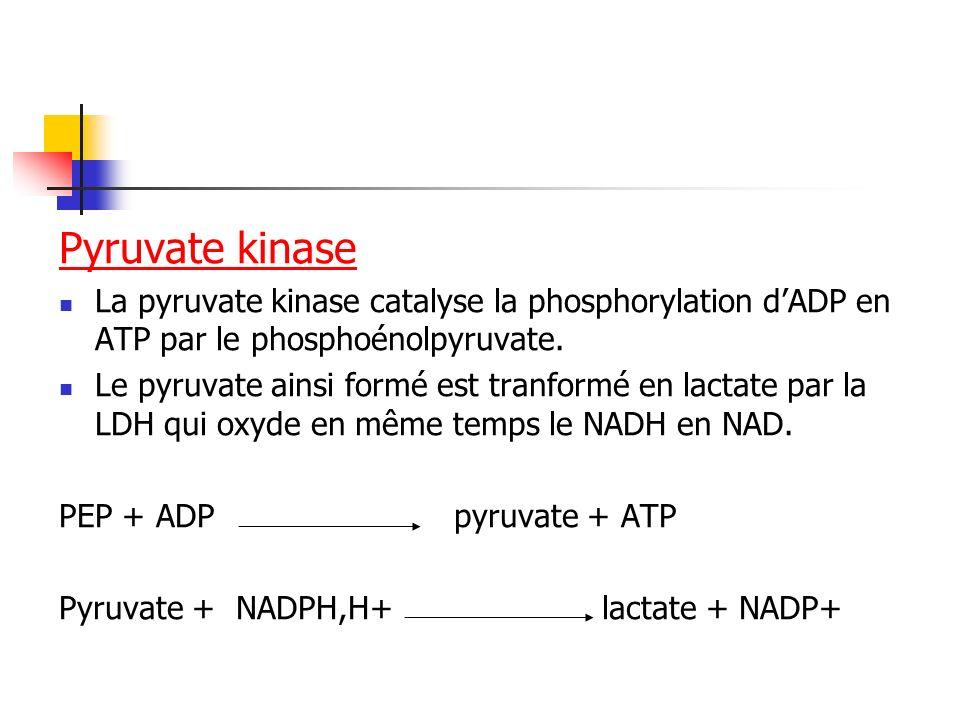 Pyruvate kinaseLa pyruvate kinase catalyse la phosphorylation d'ADP en ATP par le phosphoénolpyruvate.