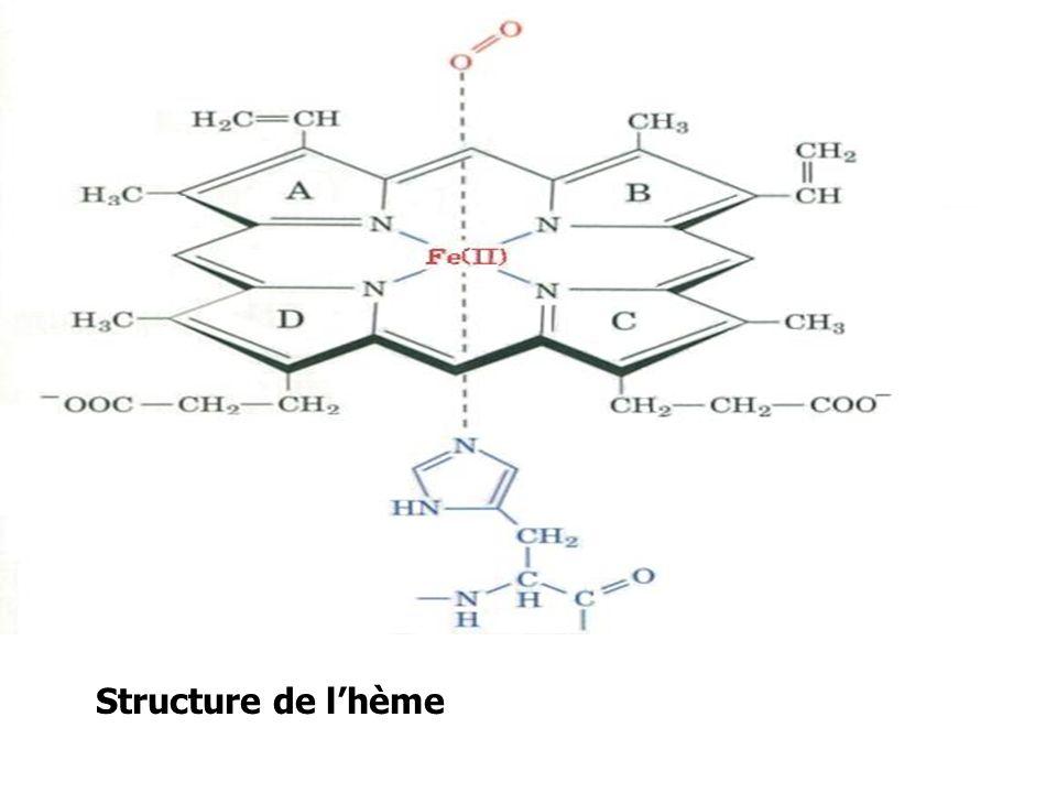 Structure de l'hème