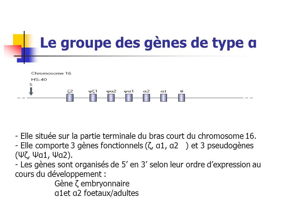 Le groupe des gènes de type α