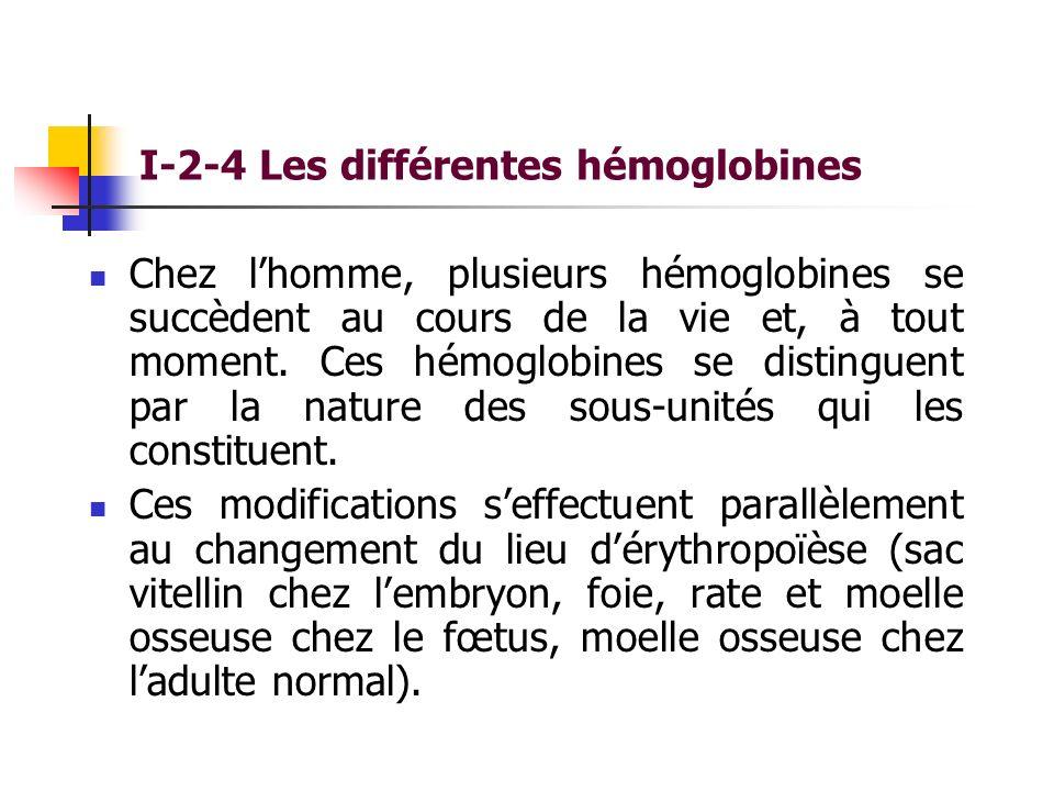 I-2-4 Les différentes hémoglobines