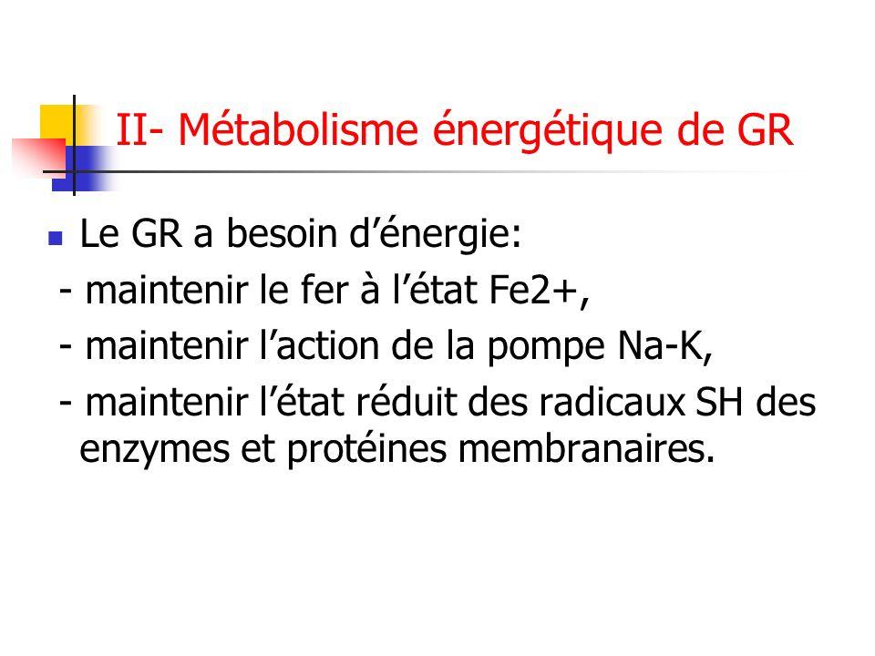 II- Métabolisme énergétique de GR