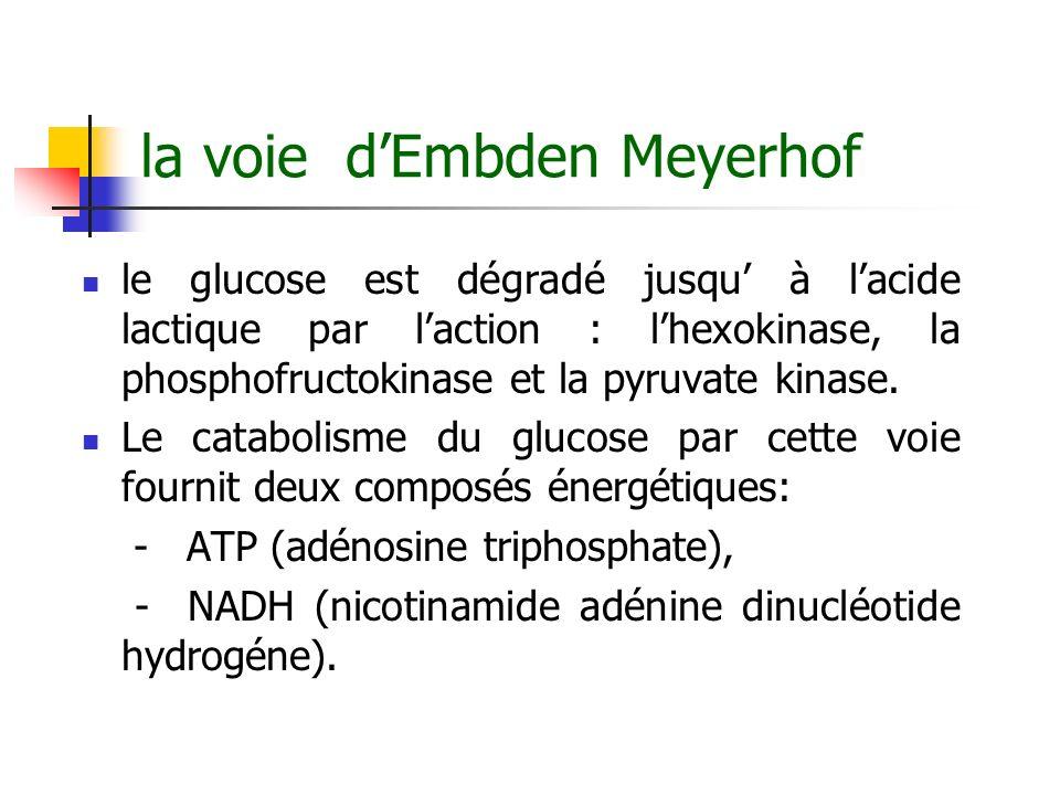 la voie d'Embden Meyerhof