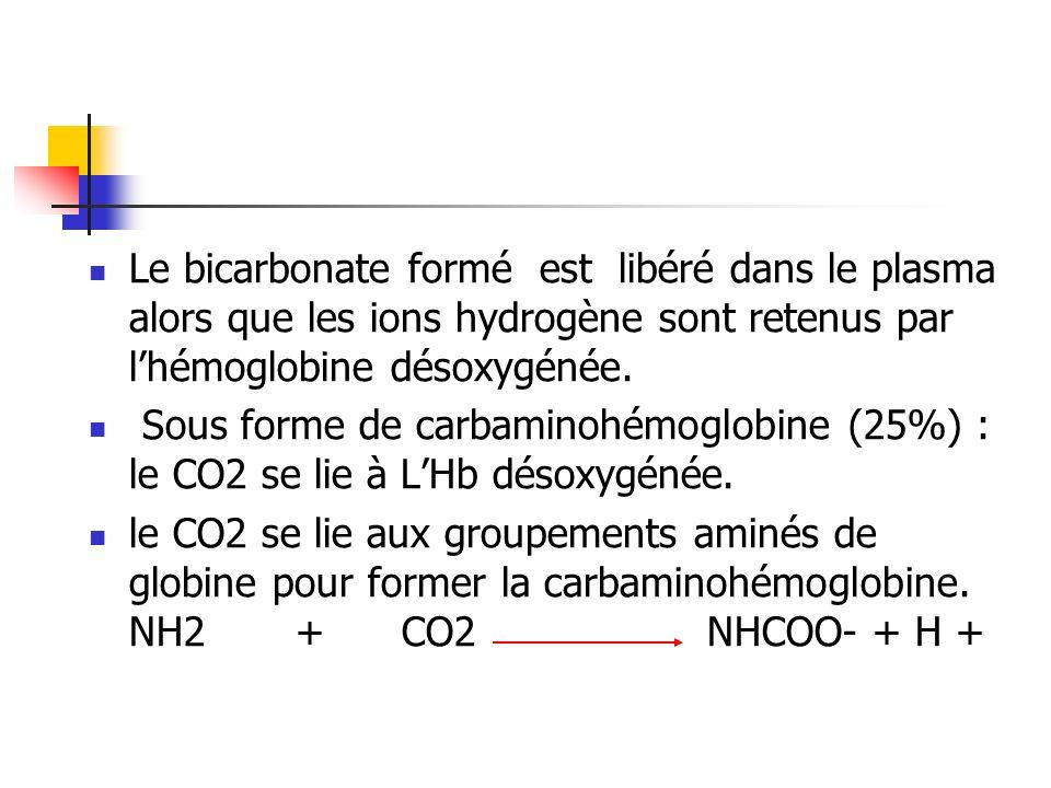 Le bicarbonate formé est libéré dans le plasma alors que les ions hydrogène sont retenus par l'hémoglobine désoxygénée.