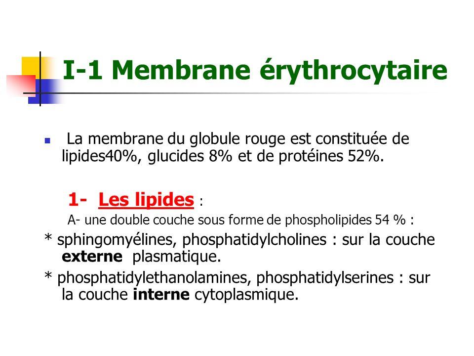 I-1 Membrane érythrocytaire