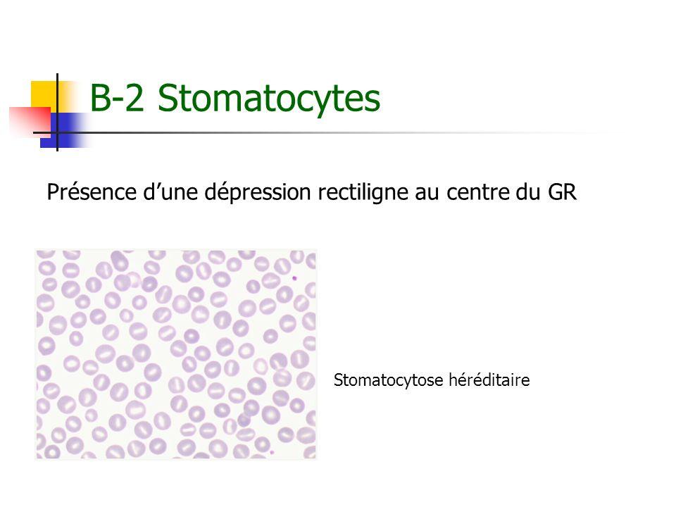 B-2 Stomatocytes Présence d'une dépression rectiligne au centre du GR