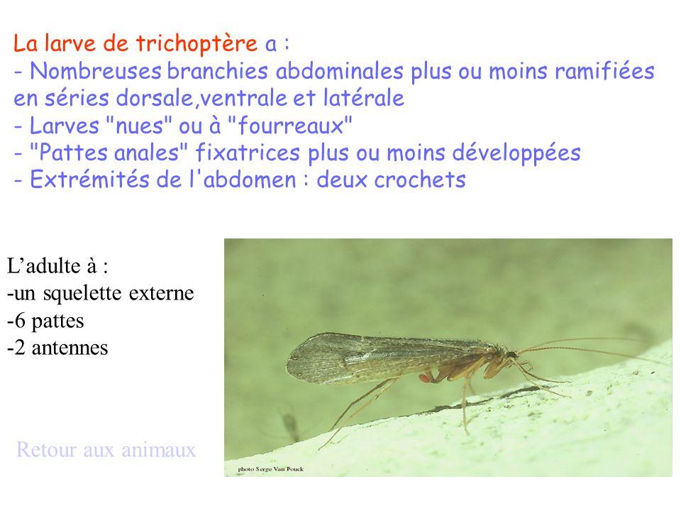 La larve de trichoptère a :