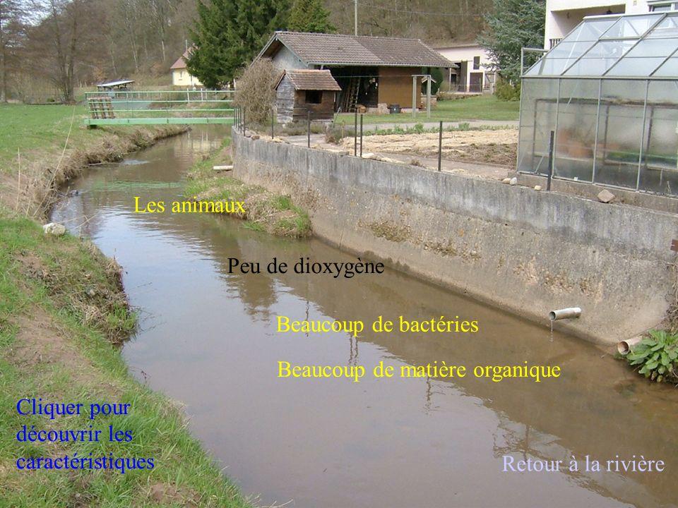 Les animaux Peu de dioxygène. Beaucoup de bactéries. Beaucoup de matière organique. Cliquer pour découvrir les caractéristiques.