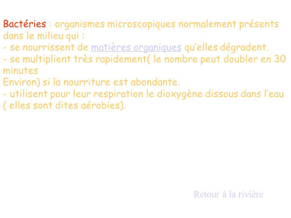 Bactéries : organismes microscopiques normalement présents