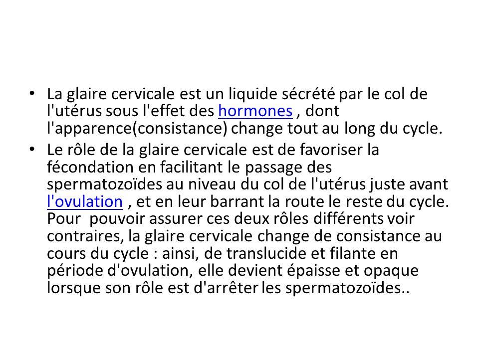 La glaire cervicale est un liquide sécrété par le col de l utérus sous l effet des hormones , dont l apparence(consistance) change tout au long du cycle.