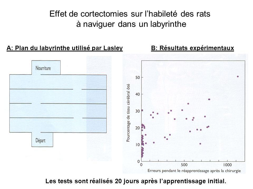 Effet de cortectomies sur l'habileté des rats