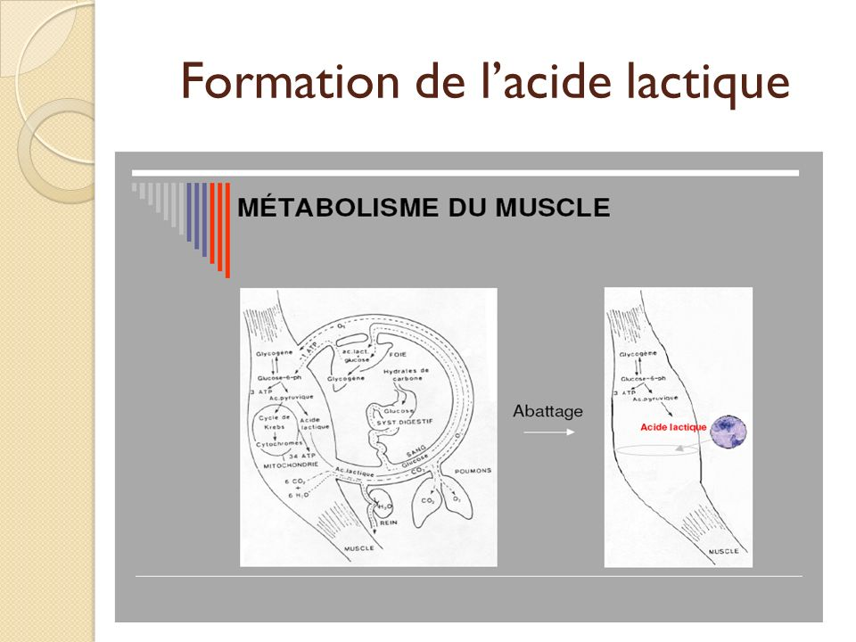 Formation de l'acide lactique