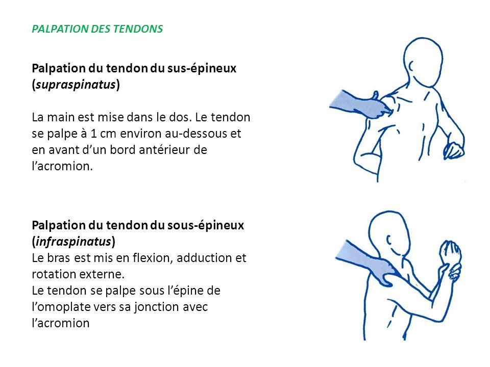 Palpation du tendon du sus-épineux (supraspinatus)