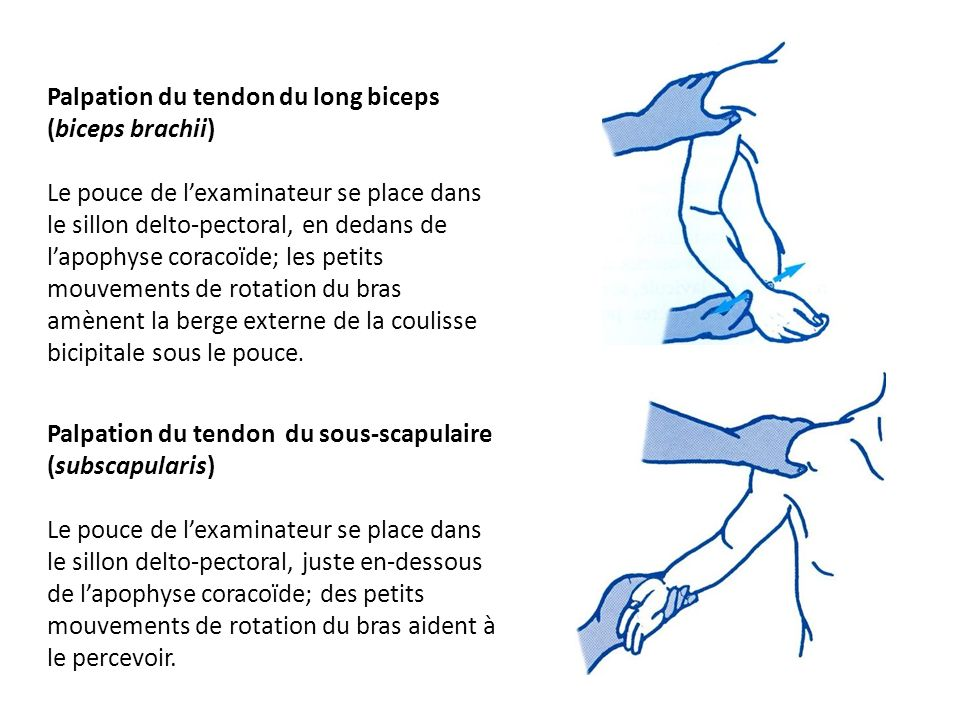 Palpation du tendon du long biceps (biceps brachii)