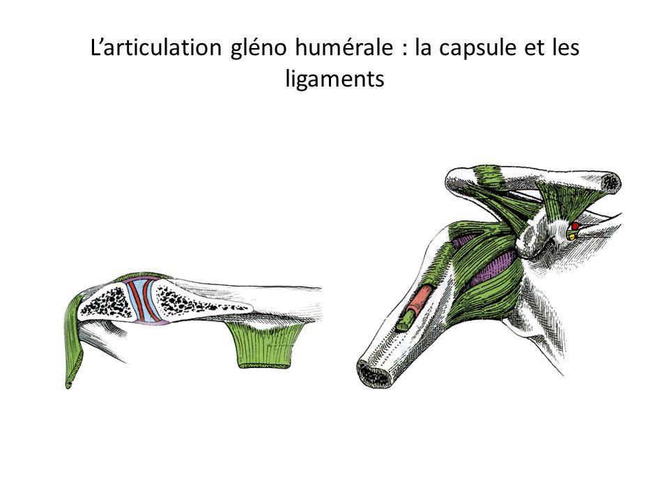 L'articulation gléno humérale : la capsule et les ligaments