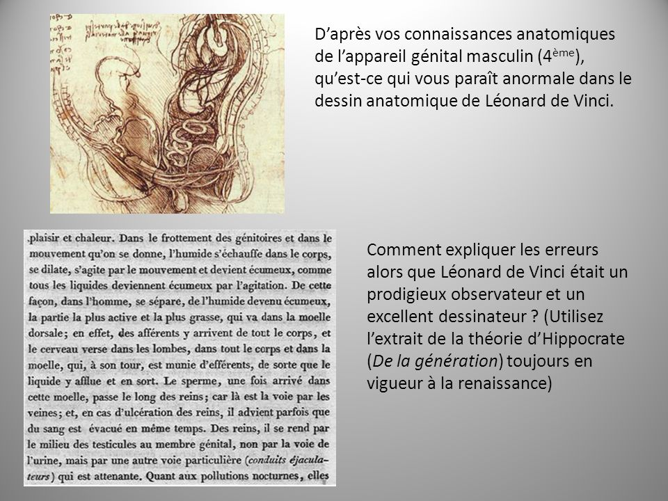 D'après vos connaissances anatomiques de l'appareil génital masculin (4ème), qu'est-ce qui vous paraît anormale dans le dessin anatomique de Léonard de Vinci.
