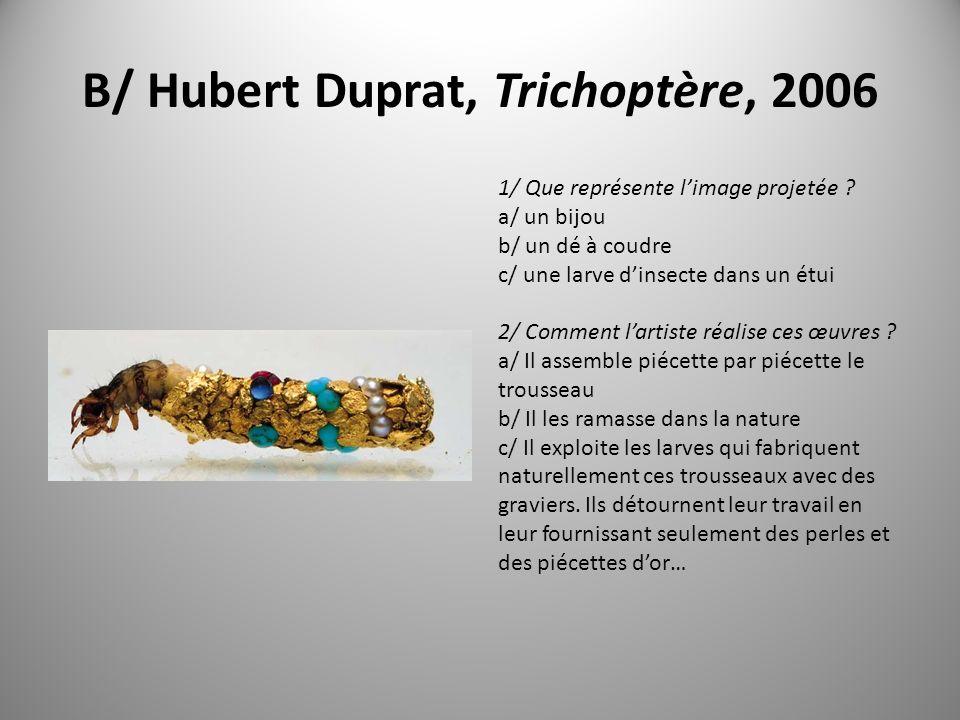B/ Hubert Duprat, Trichoptère, 2006